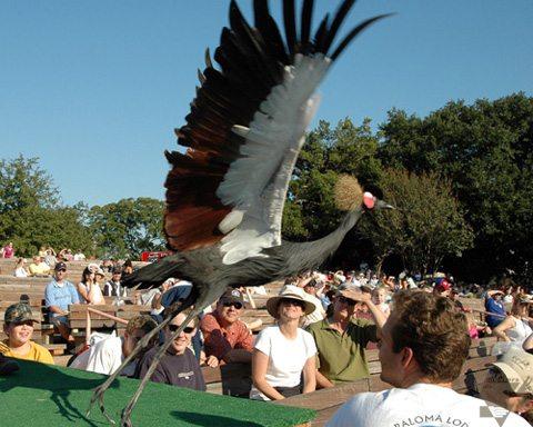 Steve Martin - African Crowned Crane
