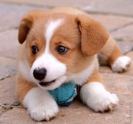 Marley ou Lassie? A escolha é sua!