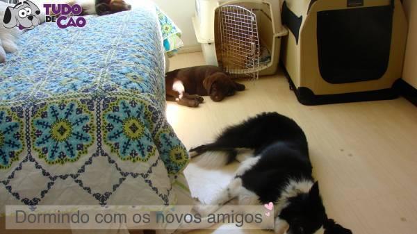b2ap3_thumbnail_Lollo6web.jpg