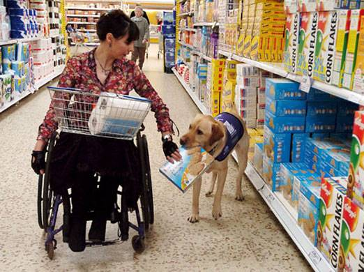 b2ap3_thumbnail_Service-Dog-Helping-to-Shop4.jpg